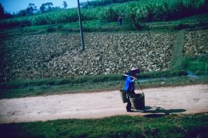Landwirtschaft ist Handarbeit. Foto: Ulrich Horb